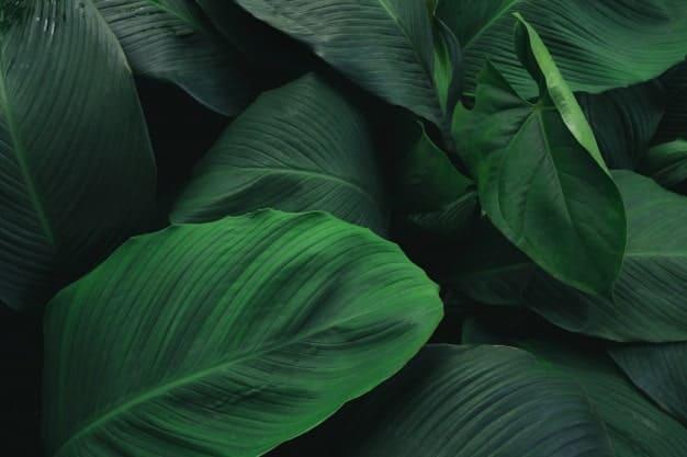 Incorporamos Dulkamara Bamboo a nuestro Catálogo